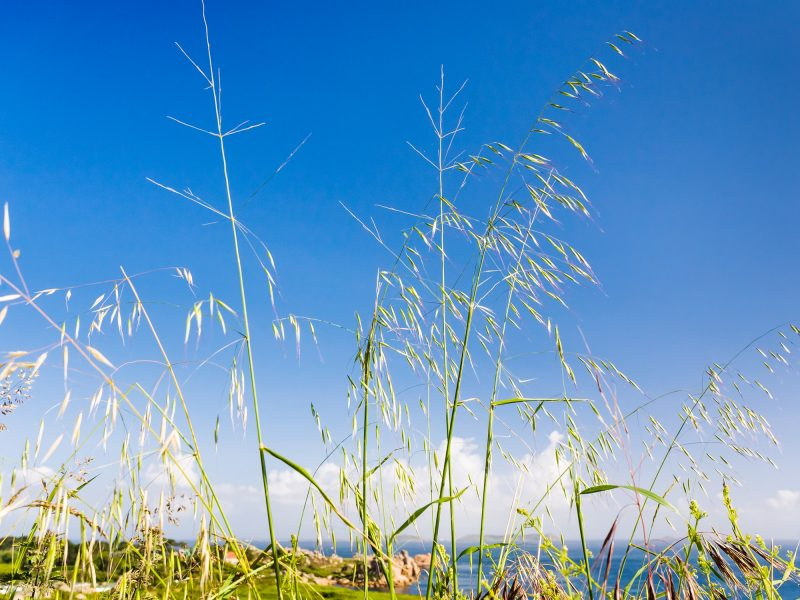 meadow grass on coastline of English Channel